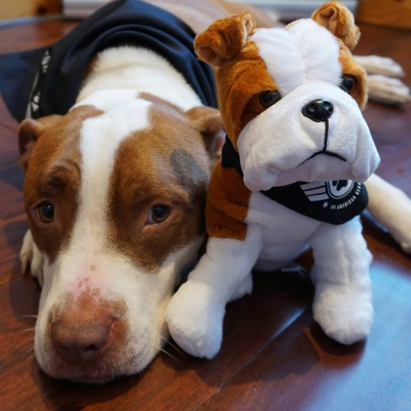 Dog with Sgt. Stubby Plush